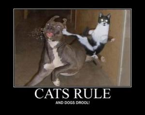 5917648574_Cats_Rule_by_FatGiraffe77_answer_2_xlarge